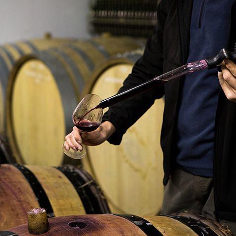 personne testant du vin